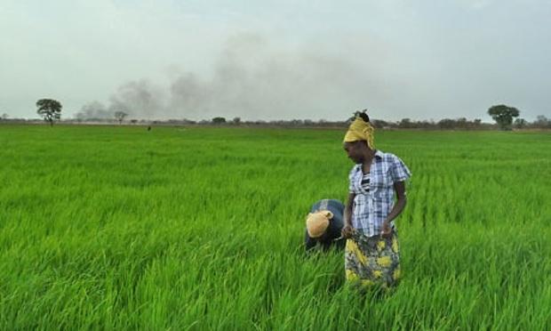 Ethio farmer